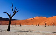 Image result for desert landscape