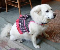 Small Dog Harness black n pink breathable mesh ruffle