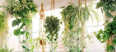 A fantastic beginner's guide to easy care indoor hanging plants. Plus great ideas on how to hang your plants without making holes in the wall or ceiling!