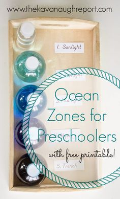 of the Ocean Sensory Bottles Zones of the Ocean for Preschoolers with Printable -- perfect for a Montessori inspired unit study on the oceanZones of the Ocean for Preschoolers with Printable -- perfect for a Montessori inspired unit study on the ocean Montessori Science, Preschool Science, Preschool Lessons, Preschool Crafts, Science Week, Teach Preschool, Montessori Homeschool, Montessori Classroom, Easy Science
