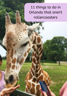 11 things to do in Orlando that aren't roller coasters - great ideas for family activities in Orlando including visiting penguins, feeding giraffes and taking an underwater adventure. Top Orlando attractions without rollercoasters. Amusement Parks In Florida, Abandoned Amusement Parks, Florida Travel, Travel Usa, Solo Travel, Travel With Kids, Family Travel, Orlando Parks, Attraction Tickets