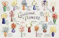Floriography: Victorian Flower Language Postcard