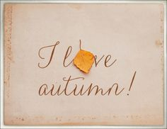 I Love Autumn quote autumn leaves fall tea cozy Autumn Day, Autumn Leaves, Golden Leaves, Autumn Nature, Hello Autumn, Autumn Garden, Autumn Theme, Albert Camus, Seasons Of The Year