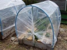 Are your growing your own food but are getting a bit bored with the same -o, same -o vegetables every meal? Would you love to grow your own food but you live in a region where the climate is just not suitable for growing a large variety of vegetables? If so, maybe you should consider growing vegetables in a polytunnel.    Growing vegetables in a polytunnel extends the vegetable growing season. It offers protection against the weather which enables you to grow vegetables that would not…