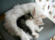 kitty cuddle cat