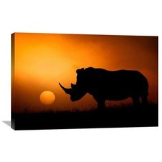 "Global Gallery 'Rhino Sunrise' by Mario Moreno Photographic Print on Wrapped Canvas Size: 24.1"" H x 36"" W x 1.5"" D"