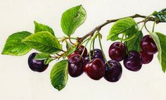 Rosie Sanders: Cherries Absolutely beautiful!