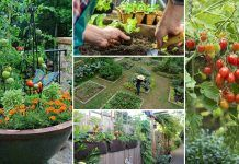 12 Great Tips For Starting A Kitchen Garden Every Beginner Should Know!