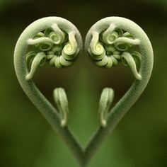 twin ferns, nature is so intricate.