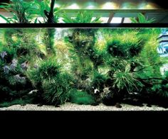 Aquascaping grassy streambank look