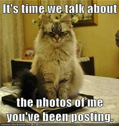 Funny Pictures Of The Day – 91 Pics Angry cat. It's time we talk about the photos of me you've been posting