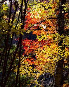 #autumn #autumncolors #autumnleaves #autumngram #nature  #紅葉