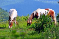 11. Mount Rogers Recreation Area and Grayson Highlands State Park, Smyth County
