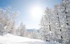The ski resorts on Japan's largest island, Honshu, are a riddle, wrapped in an enigma, wrapped in a salmon-skin roll Japan Skiing, Japan With Kids, Salmon Skin, Nagano Japan, Snowboard, Mystic, Ski Resorts, Island, Explore
