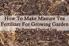 The Homestead Survival   How To Make Manure Tea Fertilizer For Garden   http://thehomesteadsurvival.com
