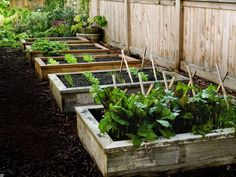 Raised Bed Vegetable Garden.