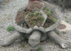 Concrete turtle planted with sempervivum