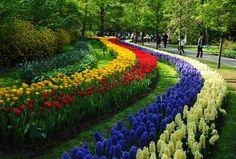 Keukenhof Botanical Gardens, Holland