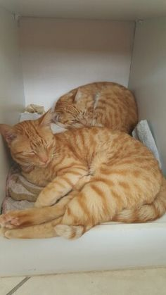 They open the cupboard doors in order to cosy up and sleep
