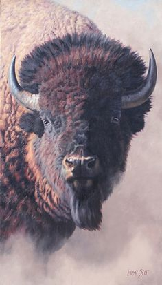 "buffalo / Lindsay Scott ""Bravado"" Western Art at the Autry Buffalo S, Buffalo Animal, American Bison, Native American Art, Wildlife Paintings, Wildlife Art, Wild Life, Animal Bufalo, Jackson Hole"