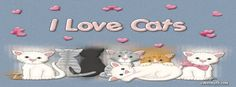 I Love Cats Facebook Cover