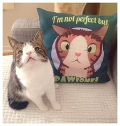 Monty, a beautifully unique cat with a sleepy look due to his lack of a nasal bridge, has become an ad hoc ambassador for cats who may be odd-looking or imperfect. With a line of T-Shirts, throw pi...