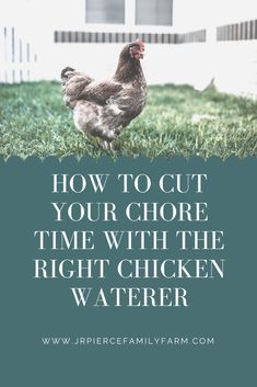 Looking to cut down on chore time? Consider these top chicken feeders to help make your life easier. Raising Backyard Chickens, Backyard Chicken Coops, Backyard Farming, Chicken Waterer, Chicken Feeders, Shade Perennials, Shade Plants, Chicken Facts, Raising Farm Animals