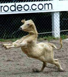 Petition · U.S. Government: Ban All Rodeos in the U.S. · Change.org   - 14.409/03.04.16