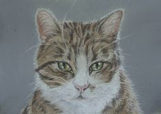 Pepsi. Tabby cat. Painted in pastels by Sharon Douglas. www.sharondouglas.weebly.com