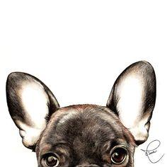 Hello monday!! #mysweetportrait #mysweetportraithome #nivearomaniniportfolio #drawing #draw #instadrawing #pencil #lapis #pencildrawing #art #instaart #artist #arte #illustration #ilustração #desenho #pet #petportrait #dog #cachorro #doglover #frenchie #frenchbulldog #frenchiesofinstagram #animal #animallover #eyes #ears