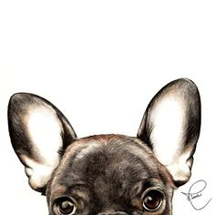 Hello monday!! #mysweetportrait #mysweetportraithome #nivearomaniniportfolio #drawing #draw #instadrawing #pencil #lapis #pencildrawing #art #instaart #artist #arte #illustration #ilustração #desenho #pet #petportrait #dog #cachorro #doglover #frenchie #frenchbulldog #frenchiesofinstagram #animal #animallover #eyes #ears