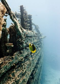 Sunken Ship ~ Photo by...Sebastian Gerhard - one day I hope to go diving and sea sunken ships