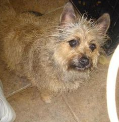 """Col. Potter Cairn Rescue Network: SHYANNE finds a Warm Welcome at CP!  Despite her name """"ShyAnne"""", she is said to be a social, funny girl who lost her home due to her owner's serious health issues."""