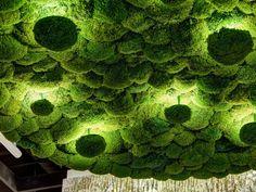 Cushio moss wall lamp / ceiling lamp MOOSALISA by Freund GmbH Cushio moss wall lamp / ceiling lamp M Moss Wall Art, Moss Art, Moss Graffiti, Moss Garden, Cool Lamps, Green Life, Ceiling Lamp, Modern Lamps, Modern Wall