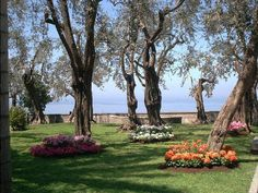 villa Fondi di Sorrento Sorrento, Plants, Wedding, Valentines Day Weddings, Weddings, Plant, Marriage, Planting, Planets