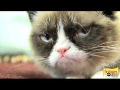 Grumpy Cat Interview 2013 on GMA No Meme Felines Exclusive Video
