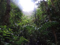 Rainforest Monteverde/Costa Rica
