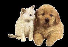 Kat en Golden Retriever pup