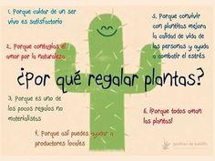 Regalar plantas Succulent Arrangements, Cacti And Succulents, Planting Succulents, Cactus Plants, Planting Flowers, Violet Garden, Butterfly Wallpaper, Interior Plants, Cactus Y Suculentas