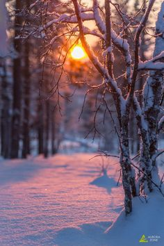 Winter Sunset, Winter Scenery, Winter Pictures, Nature Pictures, Holiday Pictures, Winter Photography, Nature Photography, Photography Flowers, Photography Ideas