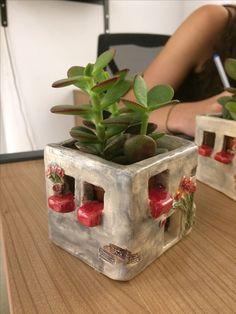 Bildergebnis für pflanze mit kopf in form einer wiebel