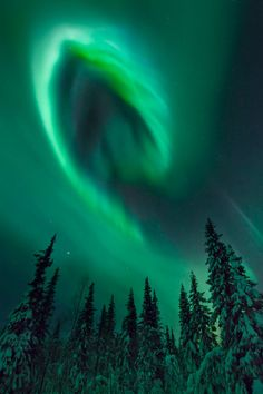 The Northern Lights, above a forest in Kiruna, Sweden.