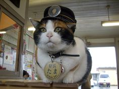 Cat-ch Tama the station master and her apprentice, Nitama