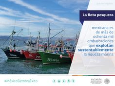 La flota pesquera mexicana es de más de ochenta mil embarcaciones que explotan sustentablemente la riqueza marina. SAGARPA SAGARPAMX #MéxicoSiembraÉxito