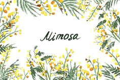 Set of Hand-Drawn Mimosa, Painted in Watercolor. Vector Illustration 1 seamless patterns 11 elements 3 greeting card 1 crown Flowers and crown have an Mimosa Flor, Wedding Stationery Sets, Wedding Invitations, Mimosas, Clipart, Yellow Wedding Flowers, Plant Drawing, Flower Invitation, Spring Flowers