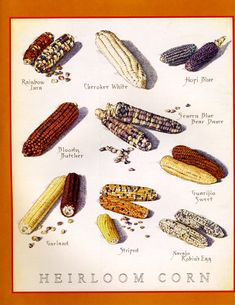 Cook's Illustrated back cover art: Heirloom Corn