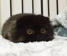 まっくろくろすけ みたいな猫が発見される!! めいちゃああああん!