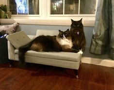 Bought my cats a tiny couch. Best purchase ever. by princessponyta cats kitten catsonweb cute adorable funny sleepy animals nature kitty cutie ca