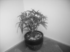 Potted plant on the stairs