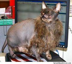 Just got myself a new kitty...I  I <3 fluffly!!
